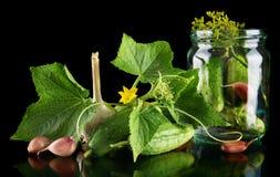 Gherkins in jar preparate for pickling on black Royalty Free Stock Photos