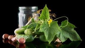 Gherkins in jar preparate for pickling on black Royalty Free Stock Photo