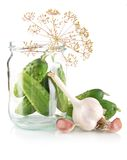Gherkins in jar preparate for pickling on white. Gherkins in jar preparate for pickling with flower bud,leaves,jar,garlic,dill flowers and tendrils isolated on Royalty Free Stock Images