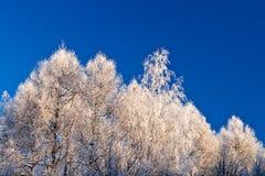 Ghiacci gli alberi Fotografia Stock