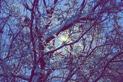 Ghiacci gli alberi alla notte la luce di una lanterna attraverso i rami o Fotografia Stock