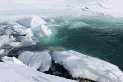 Ghiacci la fusione sul fiume in primavera, fiume di Katun, Altai, Russ Fotografia Stock