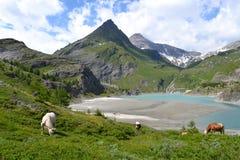 Ghiacciaio austriaco Pasterze delle alpi delle montagne Fotografia Stock