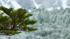 Ghiacciaio nella Patagonia video d archivio