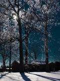 Ghiaccio in alberi Immagine Stock Libera da Diritti
