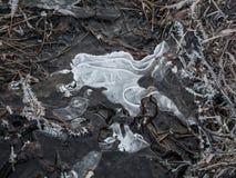 Ghiaccio congelato nell'erba della riva di mare fotografia stock