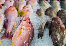 Ghiaccio del pesce al mercato di strada Fotografia Stock Libera da Diritti