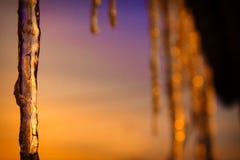 Ghiaccio dell'ago nel tramonto Immagine Stock Libera da Diritti