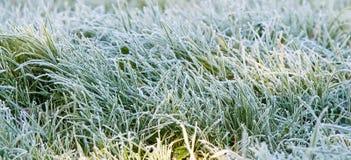 ghiaccio dell'erba Fotografia Stock Libera da Diritti