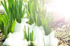 Ghiaccio della primavera congelato Fotografie Stock