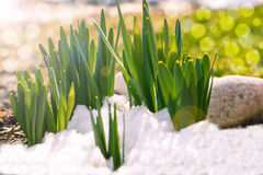 Ghiaccio della primavera congelato Fotografia Stock
