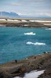 Ghiaccio di galleggiamento blu, laguna del turchese, Jokulsarlon, Islanda immagine stock