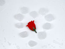Ghiaccio, di rosa, cuore Fotografia Stock Libera da Diritti