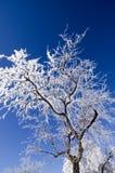 Ghiaccio ed albero innevato Immagini Stock Libere da Diritti