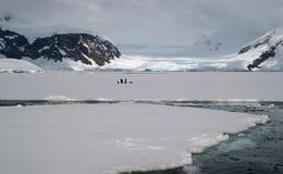 Ghiaccio marino antartico Fotografie Stock