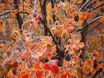 Ghiaccio sulle foglie dell'albero Fotografia Stock