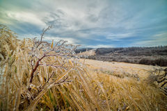 Ghiaccio sulle piante sulla mattina molto fredda Fotografia Stock Libera da Diritti