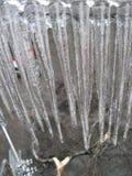 Ghiaccioli, albero Fotografie Stock