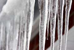 Ghiaccioli di inverno Immagine Stock Libera da Diritti