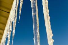 Ghiaccioli di inverno e fondo del cielo blu Fotografia Stock