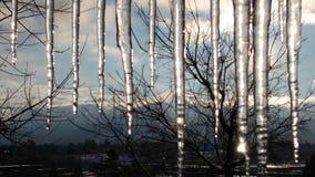 Ghiaccioli di nord-ovest Fotografia Stock Libera da Diritti