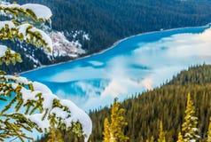 Ghiaccioli di Snowy su un albero fotografia stock