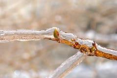 Ghiaccioli sul ramoscello dopo pioggia congelantesi Fotografie Stock Libere da Diritti