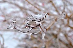 Ghiaccioli sul ramoscello dopo pioggia congelantesi Fotografia Stock Libera da Diritti