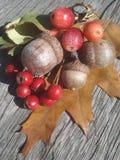 Ghiande e bacche rosse selvatiche sul bordo di legno Immagini Stock Libere da Diritti