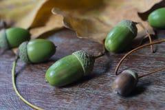 Ghiande e foglie della quercia sul fuoco selettivo del fondo di legno Fotografia Stock