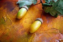 Ghiande su un ramo della quercia con le foglie Immagini Stock