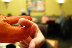 Ghigliottina del dito dei frutti di mare fotografia stock