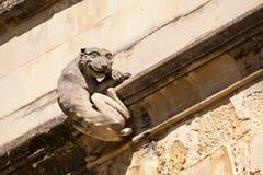 Ghignare gatto Fotografia Stock Libera da Diritti