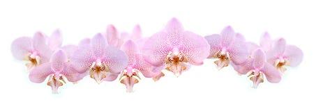 Ghirlanda dell'orchidea Fotografie Stock Libere da Diritti