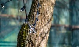 Ghirlanda delle lampade su un albero nella prospettiva Immagine Stock