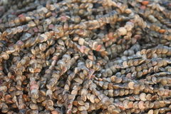Ghirlanda di sguardo impressionante delle conchiglie minuscole Fotografie Stock