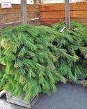 Ghirlanda Roping del pino per la decorazione di Natale fotografia stock