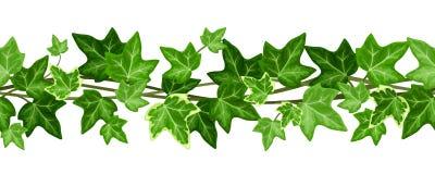Ghirlanda senza cuciture orizzontale con le foglie dell'edera Illustrazione di vettore Fotografie Stock