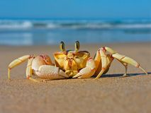 Free Ghost Crab Stock Image - 1377121