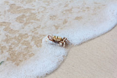 Ghost crab on a beach Stock Photos
