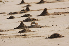 Ghost Crab Mounds Stock Photography