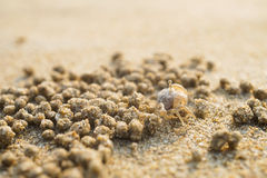 Ghost crab on sand beach Stock Photography