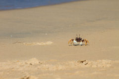 Ghost Crab on the Sand Royalty Free Stock Photography