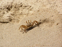 Ghost crab. In the South-East Asia Stock Image