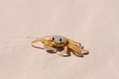 Ghost crab Stock Photo