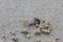 Ghost Crabs Royalty Free Stock Photo