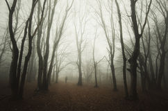Ghost in the fog. In mysterious forest Royalty Free Stock Photo