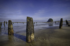 Ghost Forest on the Oregon Coast Stock Photo