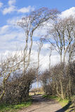 Ghost forest on the Baltic Sea Royalty Free Stock Photography