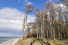 Ghost forest on the Baltic Sea Royalty Free Stock Photo